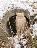 坐在排水管的猫 免版税库存照片