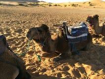 坐在撒哈拉大沙漠的嬉皮人,某处在摩洛哥 免版税库存照片
