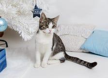 坐在新年树下的逗人喜爱的猫 库存图片