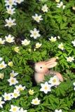 坐在春天雪花之间的复活节兔子 免版税库存图片