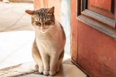 坐在晴朗的房子入口的小白色猫在看往照相机的一个红色木门旁边 免版税库存图片