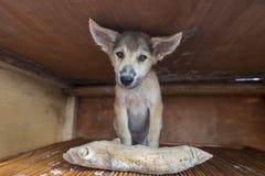 坐在有木头的木箱的愉快的小狗作为礼物 免版税库存照片