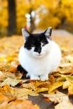 坐在有黄色叶子的秋天公园的猫 免版税库存图片