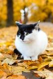 坐在有黄色叶子的秋天公园的猫 免版税库存照片