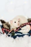 坐在木爬犁的滑稽的鼠在圣诞节装饰 库存图片