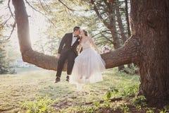 坐在树亲吻的新娘和新郎 免版税库存照片