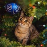 坐在树的一只逗人喜爱的猫在圣诞节装饰附近 库存照片