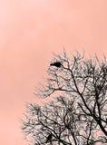 坐在树的两只鸟剪影  免版税图库摄影