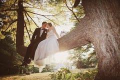 坐在树的新娘和新郎 库存照片