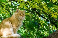 坐在树的猫 一只小被驯化的肉食哺乳动物w 免版税图库摄影