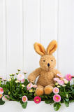 坐在桃红色雏菊的长毛绒兔宝宝为复活节装饰开花 免版税图库摄影