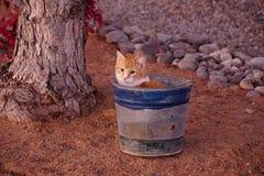坐在桶的猫 库存照片