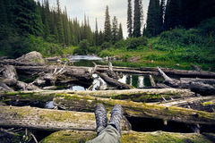 坐在森林里的游人 免版税库存照片