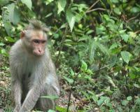 坐在森林里的猴子 库存照片