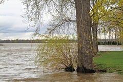 坐在水中的树 免版税库存照片