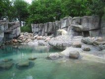 坐在池塘旁边的北极熊 免版税库存图片