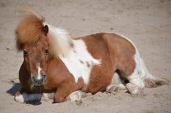 坐在沙子的小马 免版税库存照片
