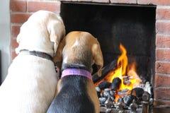 坐在火前面的狗 免版税库存图片