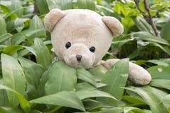 坐在熊大蒜叶子的一个玩具熊 免版税库存图片