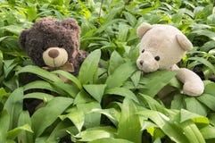 坐在熊大蒜的两女用连杉衬裤baers 图库摄影