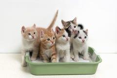 坐在猫洗手间的小猫 免版税库存照片