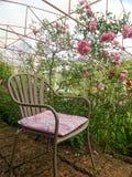 坐在玫瑰园里 库存照片