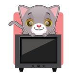 坐在电视顶部的逗人喜爱的灰色猫 免版税库存图片