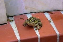 坐在白色墙壁附近的青蛙 库存照片