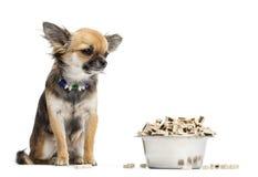 坐在碗的奇瓦瓦狗食物旁边 免版税库存图片