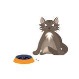 坐在碗附近的猫用食物 库存照片
