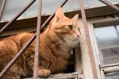 坐在窗口里的姜猫 免版税库存图片