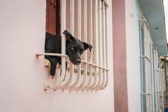 坐在窗口里的小的黑小狗 免版税库存图片
