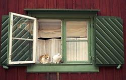 坐在窗口里 库存照片