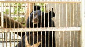 坐在笼子的大黑熊 免版税库存图片