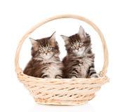 坐在篮子的两只小缅因树狸猫 查出在白色 免版税库存照片