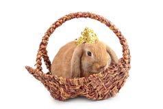 坐在篮子的逗人喜爱的法国人Lop兔子 免版税库存照片