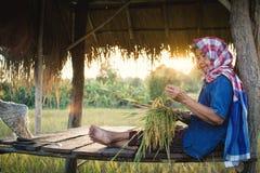 坐在米领域的客舱的老妇人农夫 图库摄影