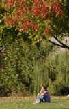 坐在结构树下的女孩在日落 库存照片