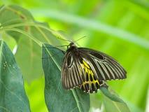 坐在结构树的蝴蝶 库存图片
