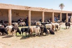 坐在绵羊市场上的绵羊客商在Rissani 库存照片