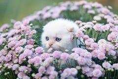 坐在花的小猫 免版税库存照片