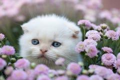 坐在花的小的小猫 免版税库存图片