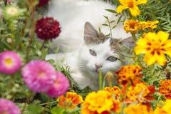 坐在花的白色猫 免版税库存图片