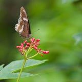 坐在花的蝴蝶 免版税库存照片