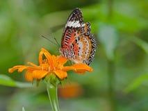 坐在花的蝴蝶 免版税库存图片