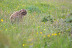 坐在草和花中的女孩在草甸 免版税库存照片