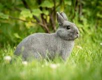 坐在草的一只幼小逗人喜爱的小的兔子 免版税库存照片