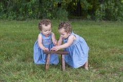 坐在草的同卵双生姐妹 免版税库存照片