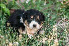 坐在草的小狗 库存照片