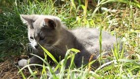 坐在草的小猫 股票视频